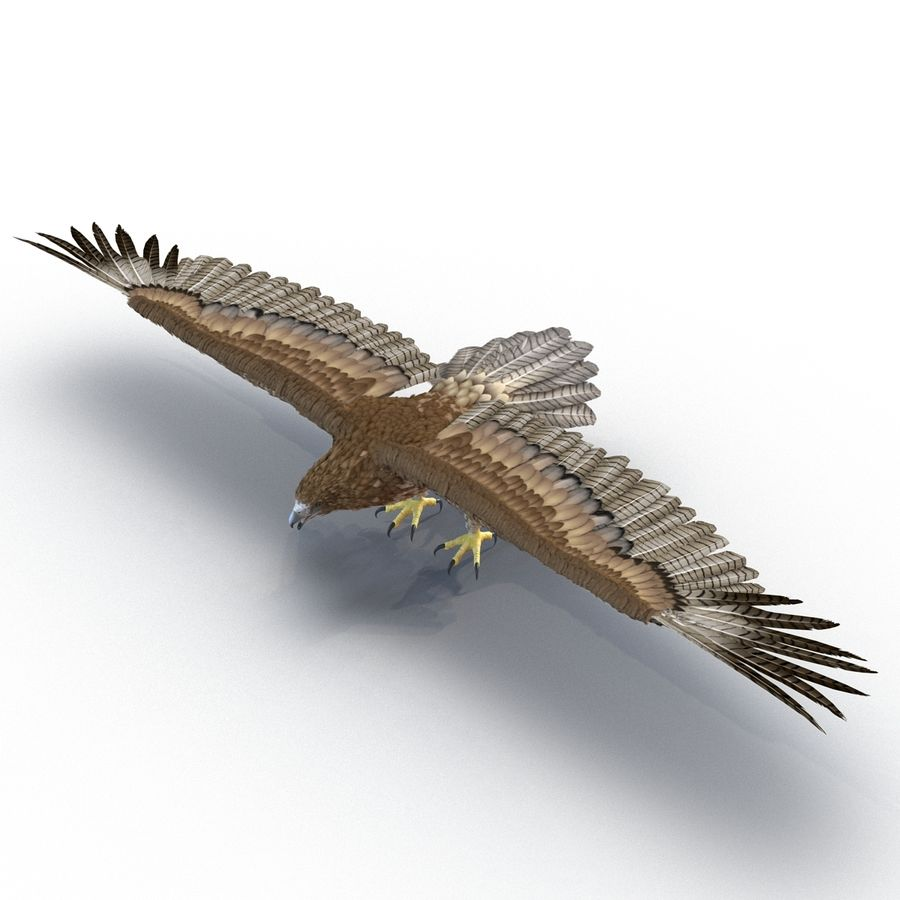 Rigged Eagles 3D Models Collection royalty-free 3d model - Preview no. 53