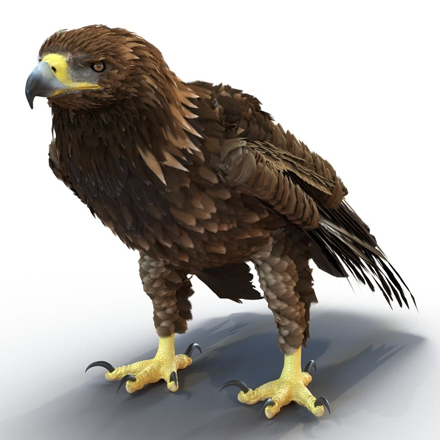 Rigged Eagles 3D Models Collection royalty-free 3d model - Preview no. 46