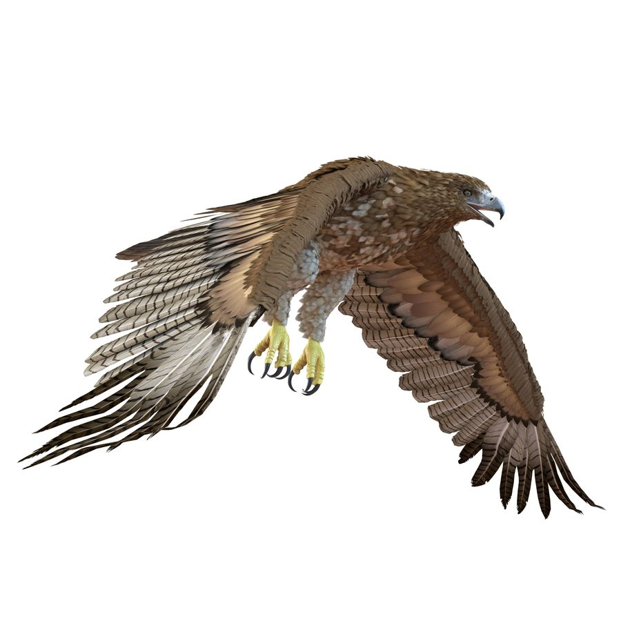 Rigged Eagles 3D Models Collection royalty-free 3d model - Preview no. 74