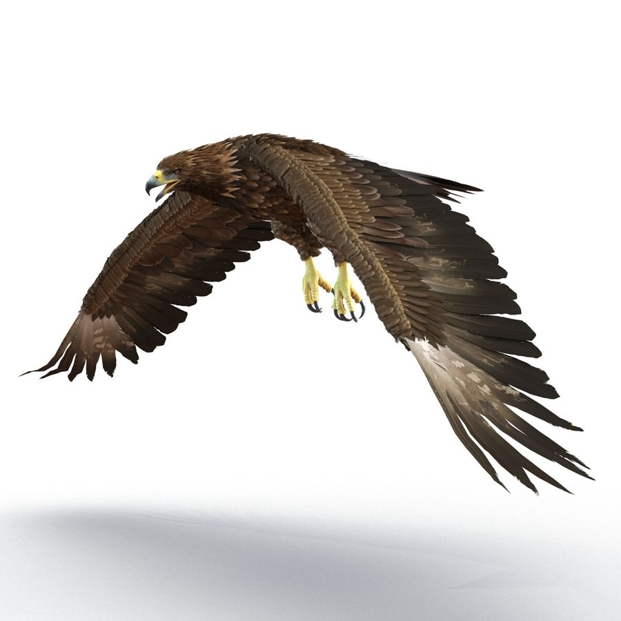 Rigged Eagles 3D Models Collection royalty-free 3d model - Preview no. 48