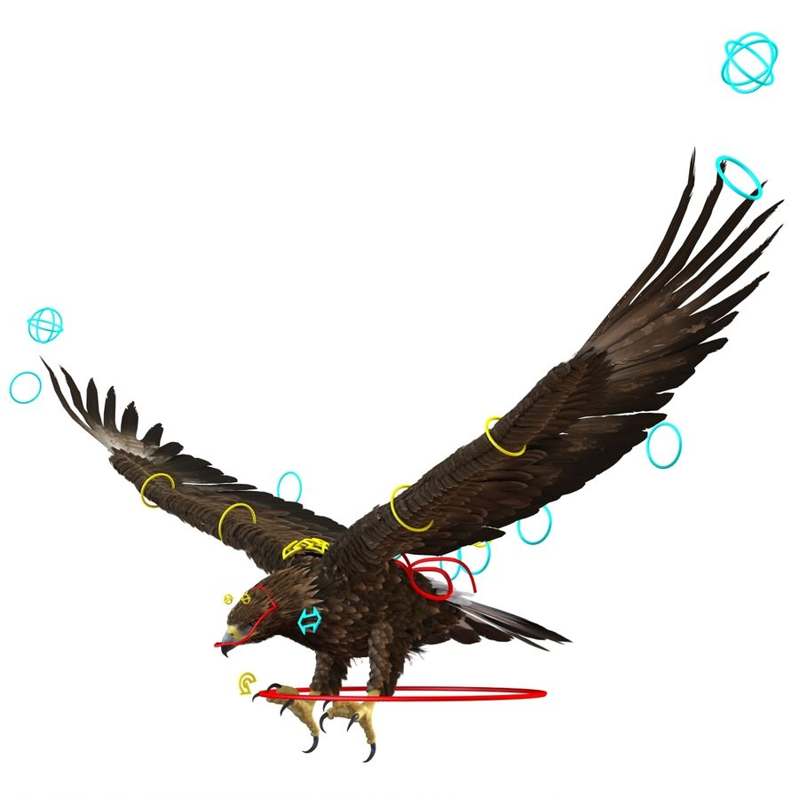 Rigged Eagles 3D Models Collection royalty-free 3d model - Preview no. 78