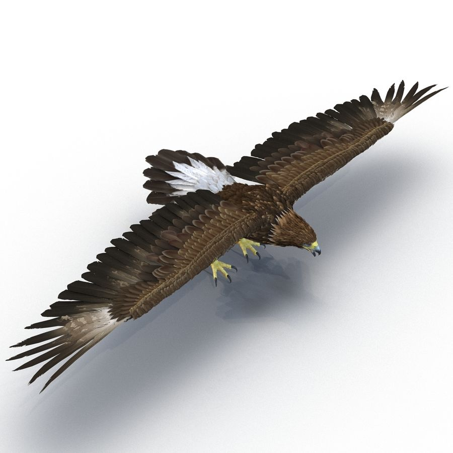 Rigged Eagles 3D Models Collection royalty-free 3d model - Preview no. 29