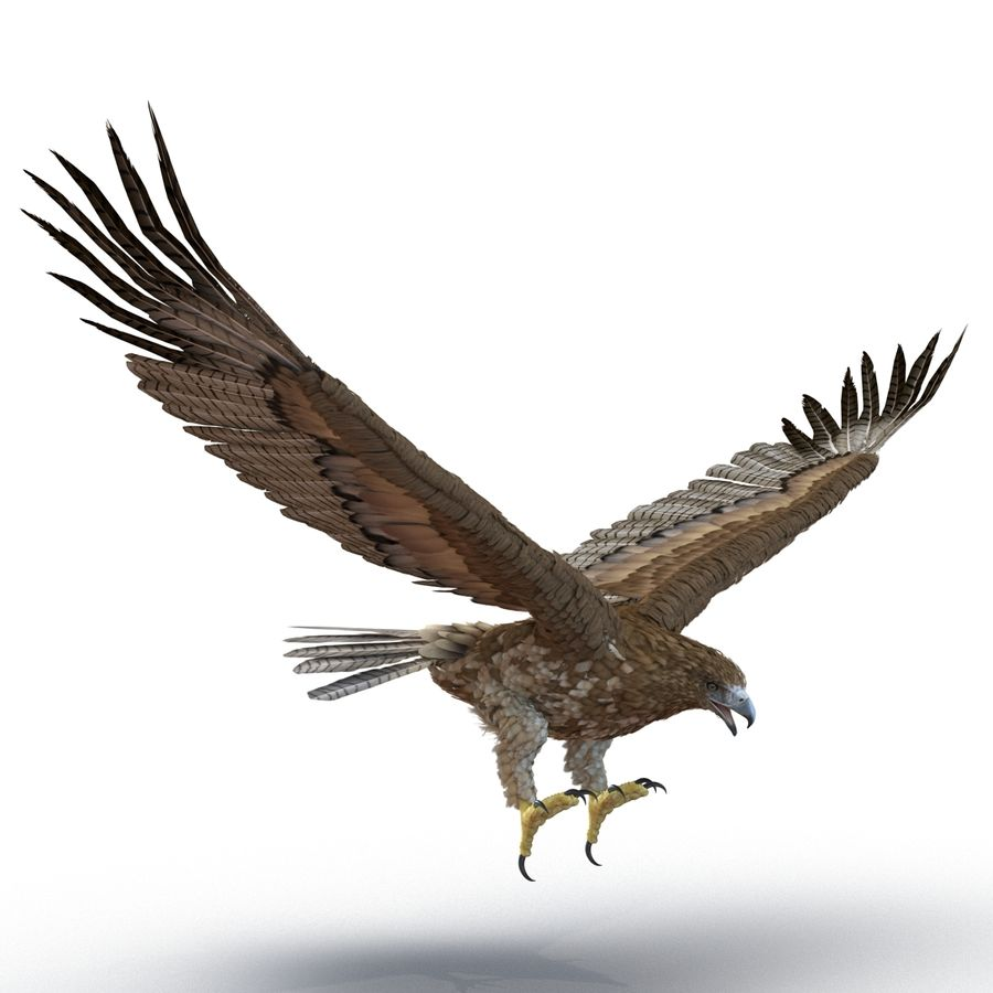 Rigged Eagles 3D Models Collection royalty-free 3d model - Preview no. 67