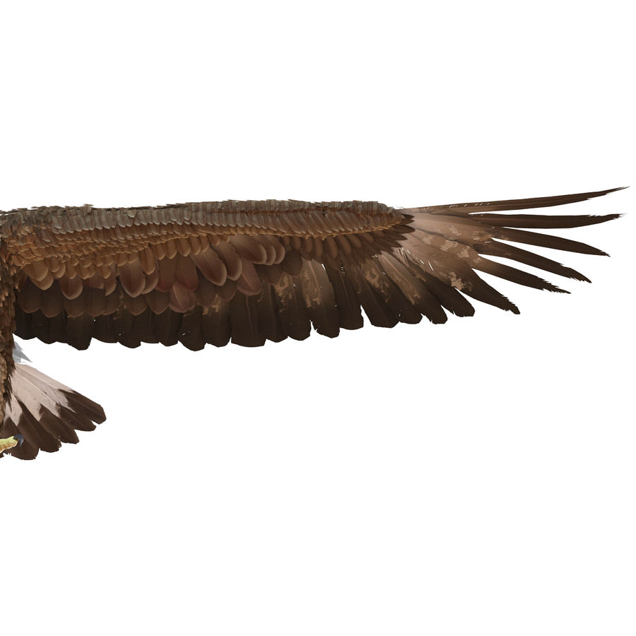 Rigged Eagles 3D Models Collection royalty-free 3d model - Preview no. 38