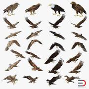 Eagles 3D Models Collection 3d model