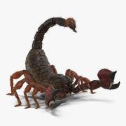 Scorpion riggad med päls 3D-modell 3d model