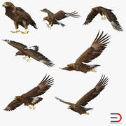 Golden Eagles 3D Models Collection 3d model