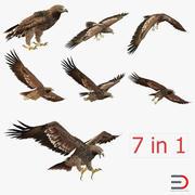 Imperial Eagle 3D Models Collection 3d model