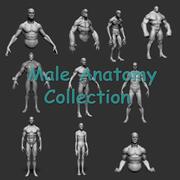男性の解剖学コレクション 3d model