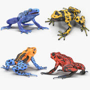 Poison Dart Frog Collection 3d model