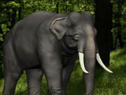 Elefante 3d model