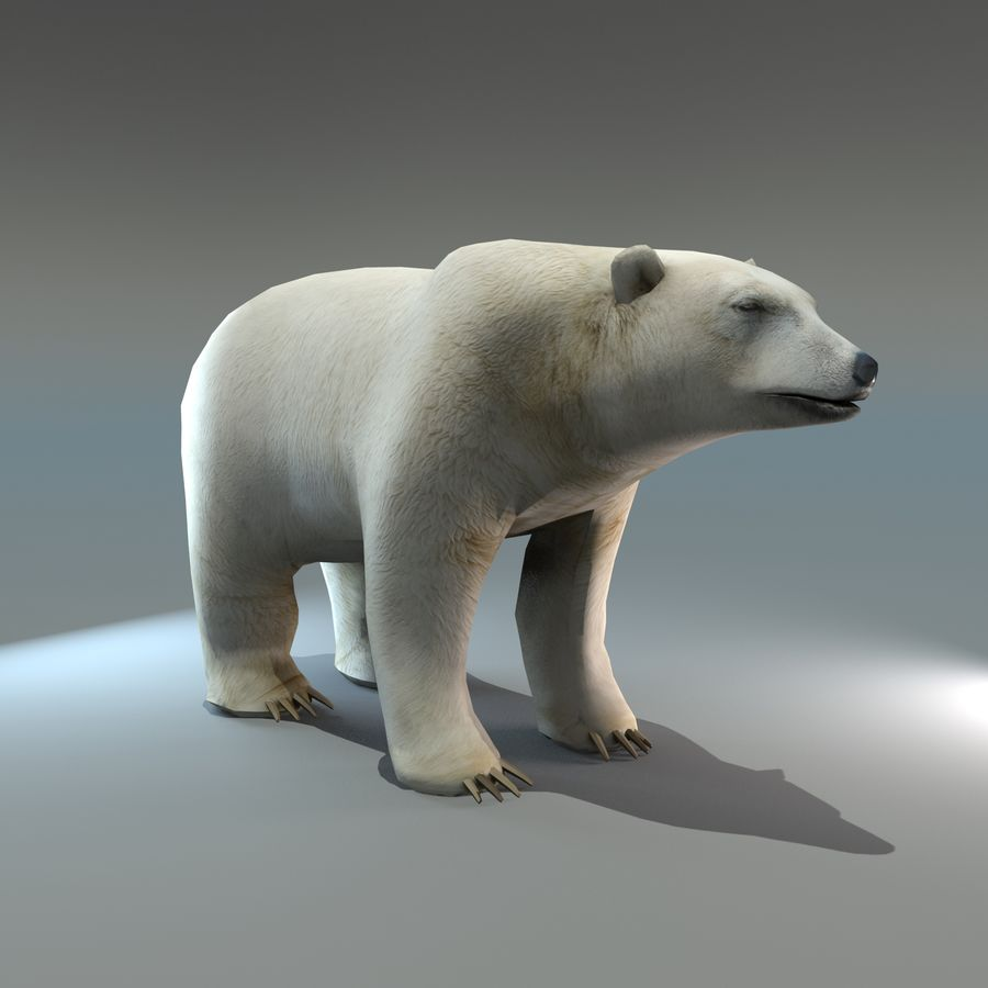 Niedźwiedź polarny royalty-free 3d model - Preview no. 1