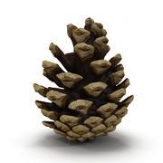 Pine Cone Open 3d model