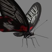 Farfalla 3d model