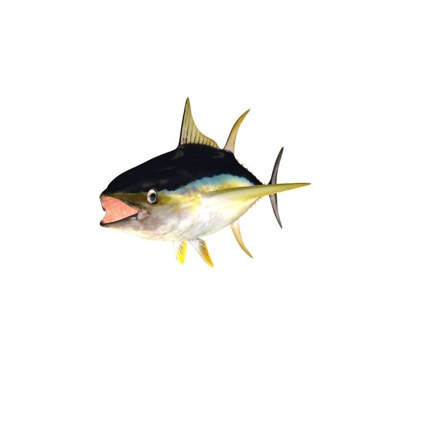 Yellowfin Tuna 3d Model 29 Obj Fbx Dae 3ds C4d Free3d