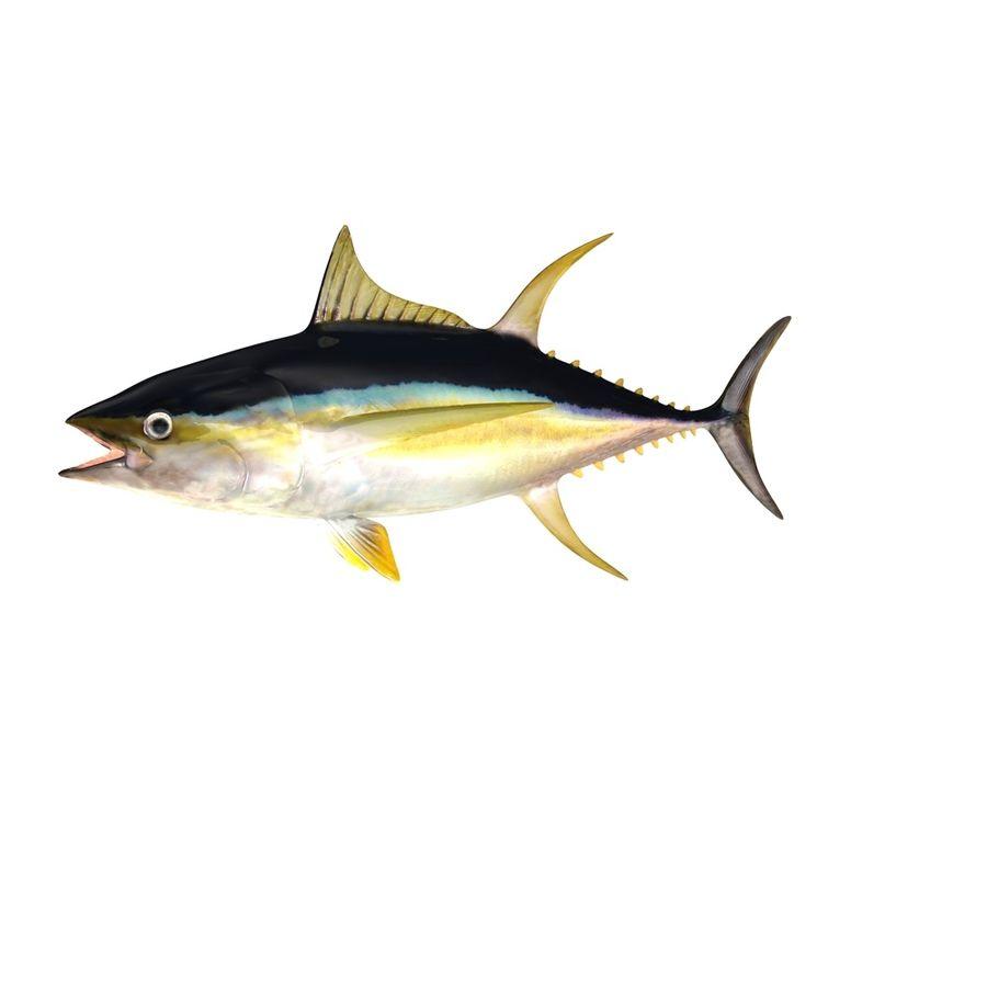 3d Tuna Fish: Yellowfin Tuna 3D Model $29