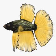 Peixe Betta 3d model