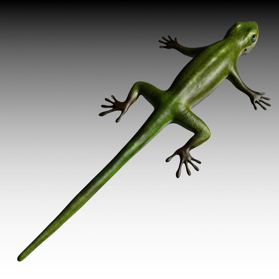 Lizard 3D Lowpoly Model Rigged & Animated royalty-free 3d model - Preview no. 11