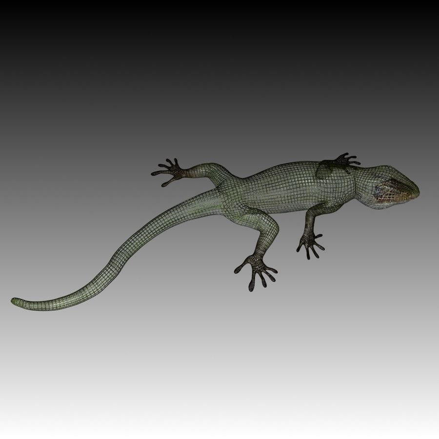Lizard 3D Lowpoly Model Rigged & Animated royalty-free 3d model - Preview no. 8