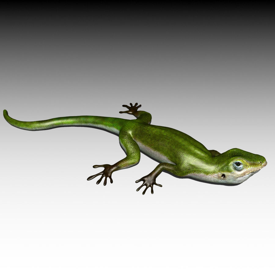 Lizard 3D Lowpoly Model Rigged & Animated royalty-free 3d model - Preview no. 2