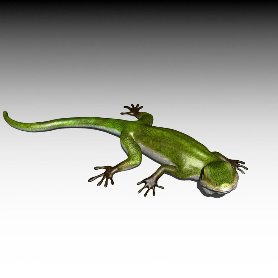 Lizard 3D Lowpoly Model Rigged & Animated royalty-free 3d model - Preview no. 4