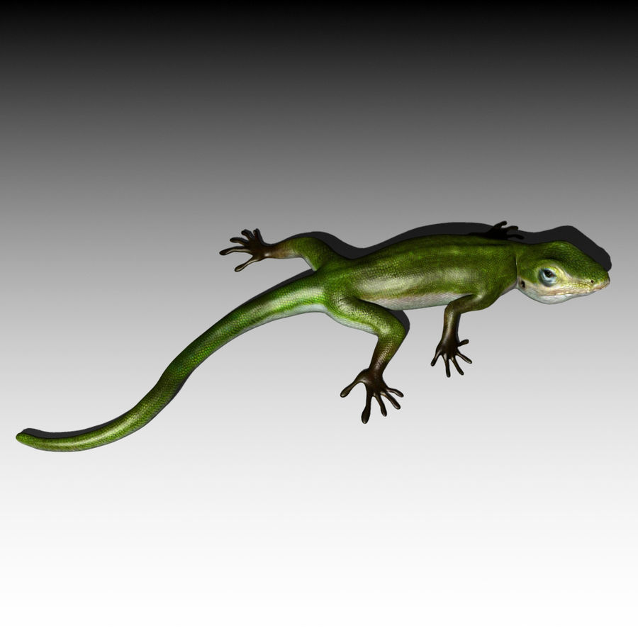 Lizard 3D Lowpoly Model Rigged & Animated royalty-free 3d model - Preview no. 6