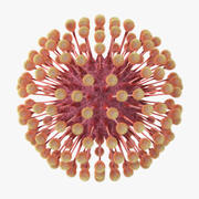 Herpes Virus 3d model
