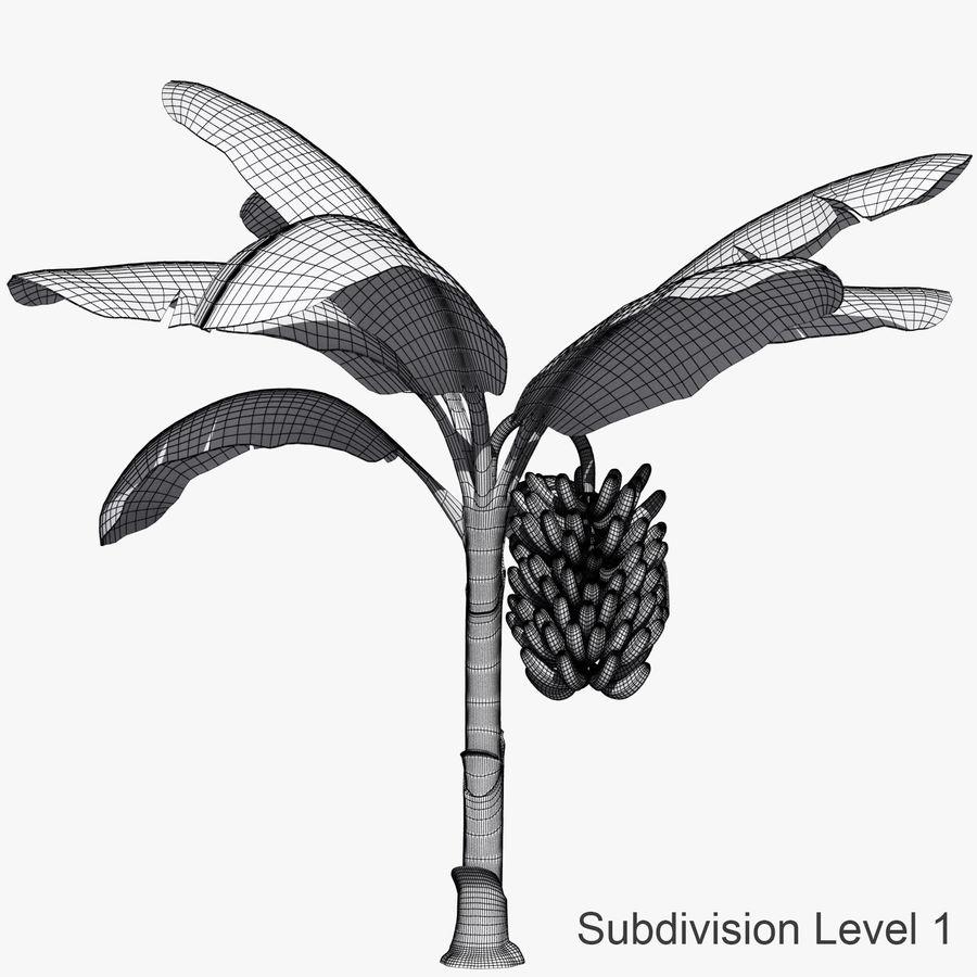 Banana Plant royalty-free 3d model - Preview no. 4