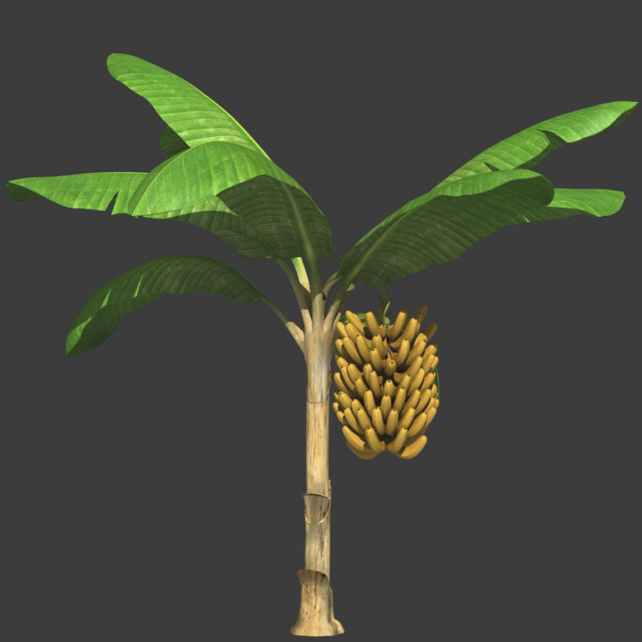 Banana Plant royalty-free 3d model - Preview no. 2
