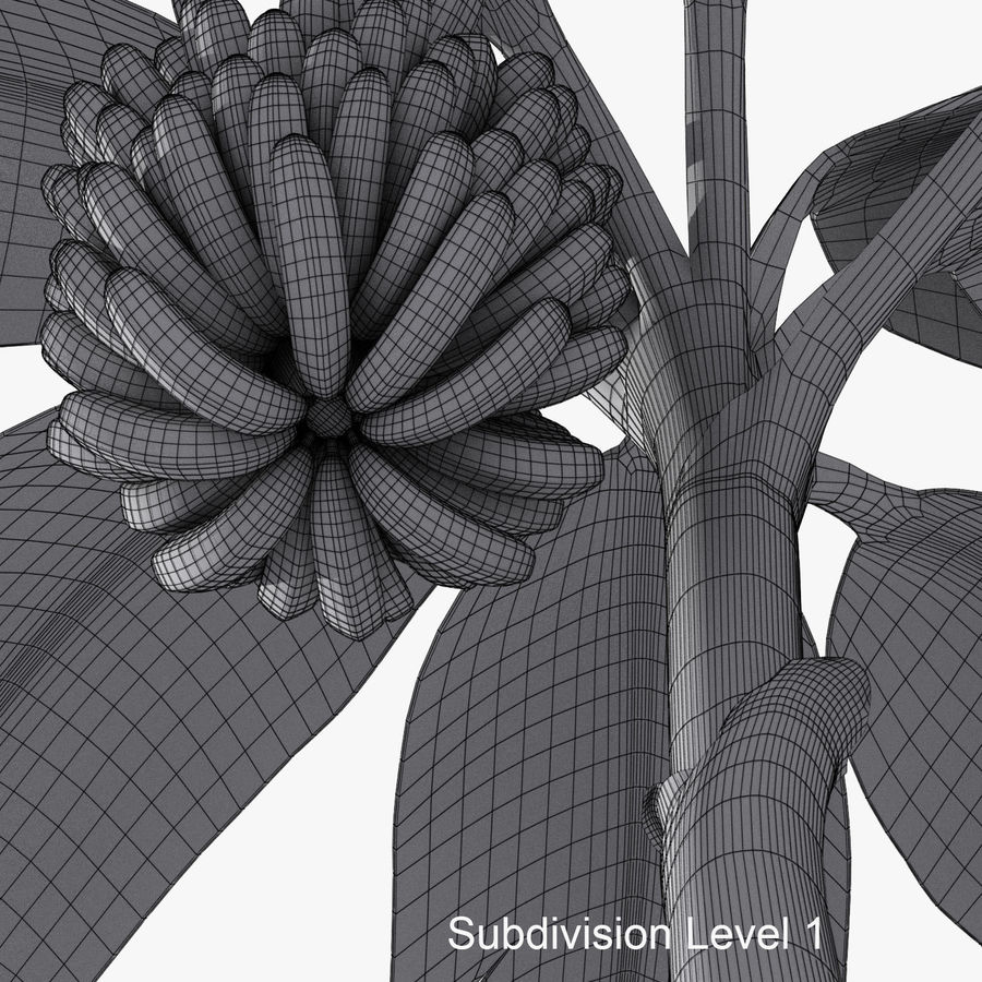 Banana Plant royalty-free 3d model - Preview no. 13