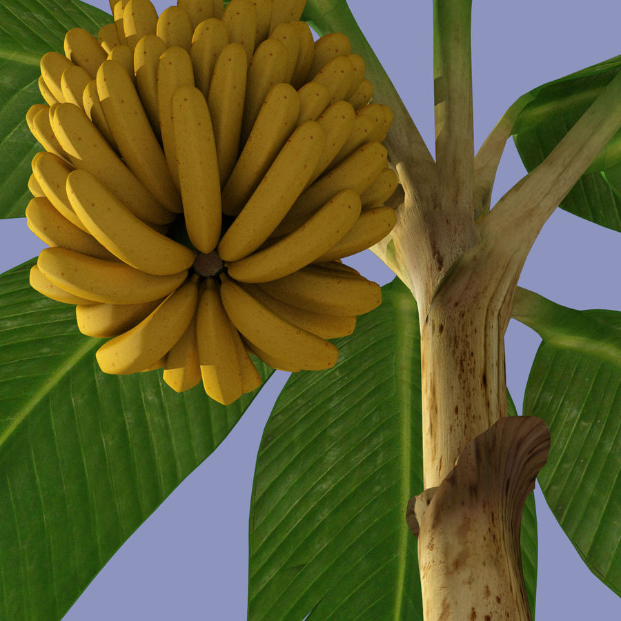 Banana Plant royalty-free 3d model - Preview no. 11