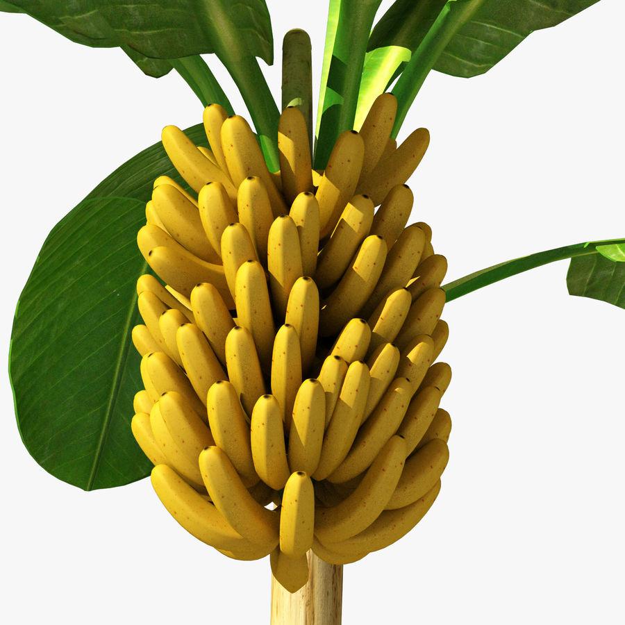 Banana Plant royalty-free 3d model - Preview no. 14