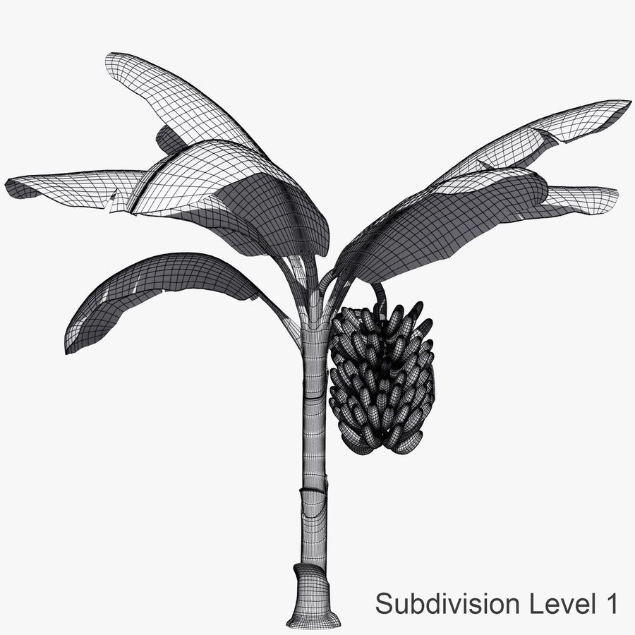 Banana Plant royalty-free 3d model - Preview no. 4