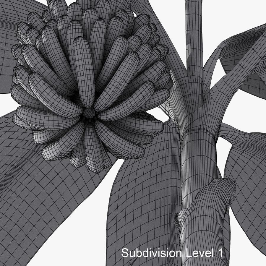 Banana Plant royalty-free 3d model - Preview no. 13