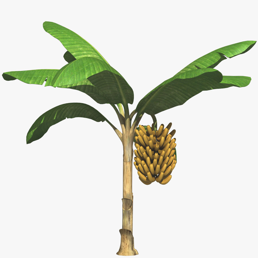 Banana Plant royalty-free 3d model - Preview no. 1