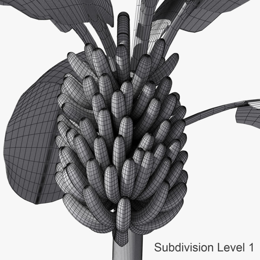 Banana Plant royalty-free 3d model - Preview no. 16