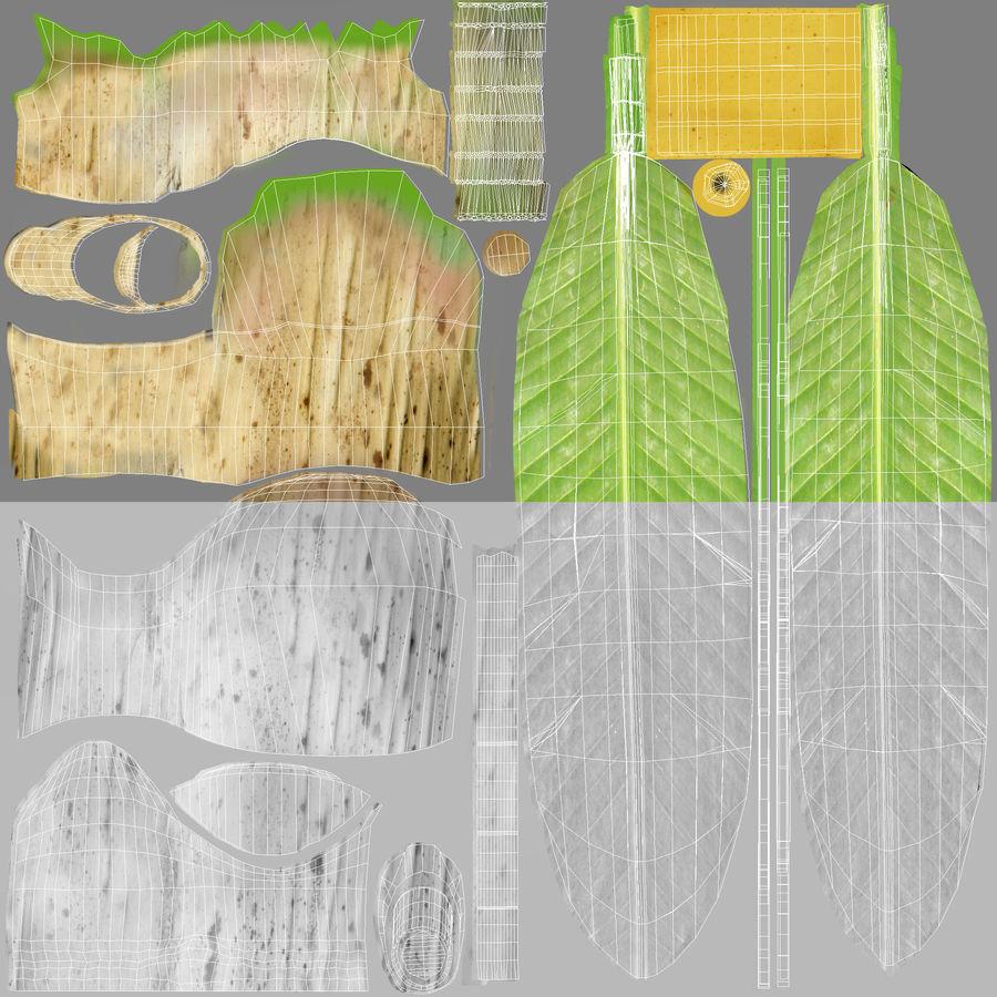 Banana Plant royalty-free 3d model - Preview no. 20
