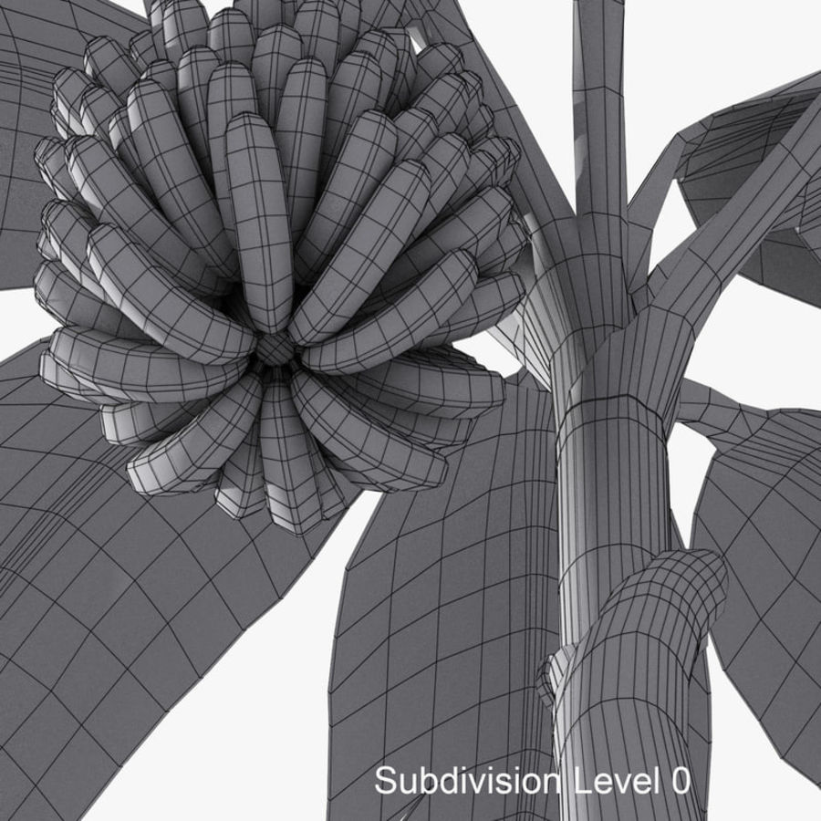 Banana Plant royalty-free 3d model - Preview no. 12