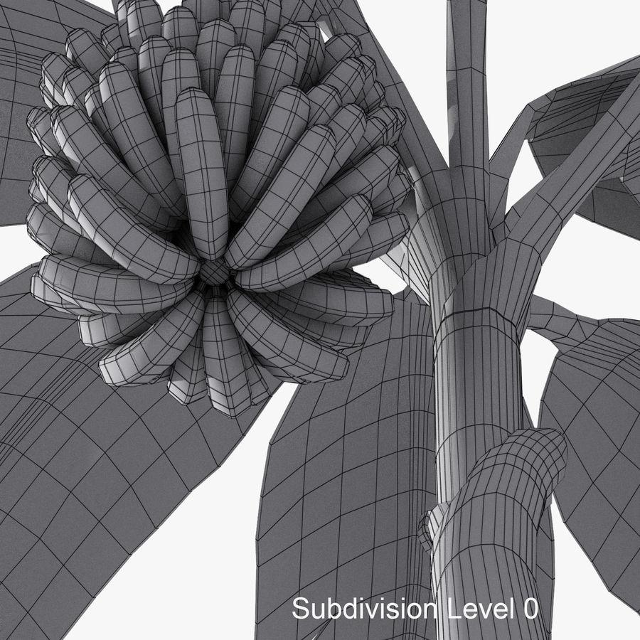 Banana Plant royalty-free 3d model - Preview no. 12
