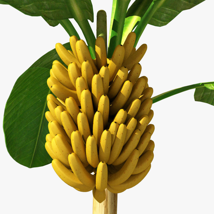 Banana Plant royalty-free 3d model - Preview no. 14