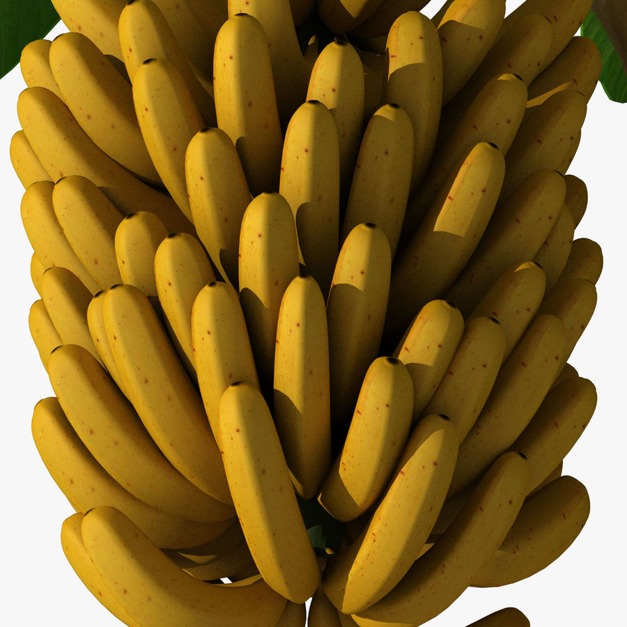 Banana Plant royalty-free 3d model - Preview no. 17