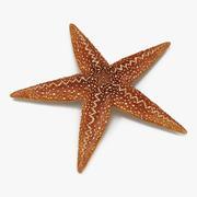 Starfish 2 3d model