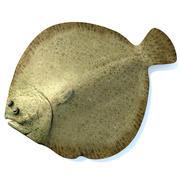 大菱鲆 3d model