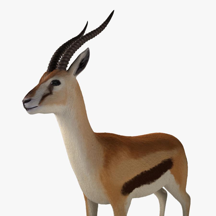 Gazelle royalty-free 3d model - Preview no. 10