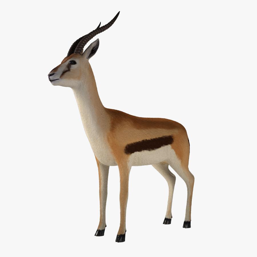 Gazelle royalty-free 3d model - Preview no. 1