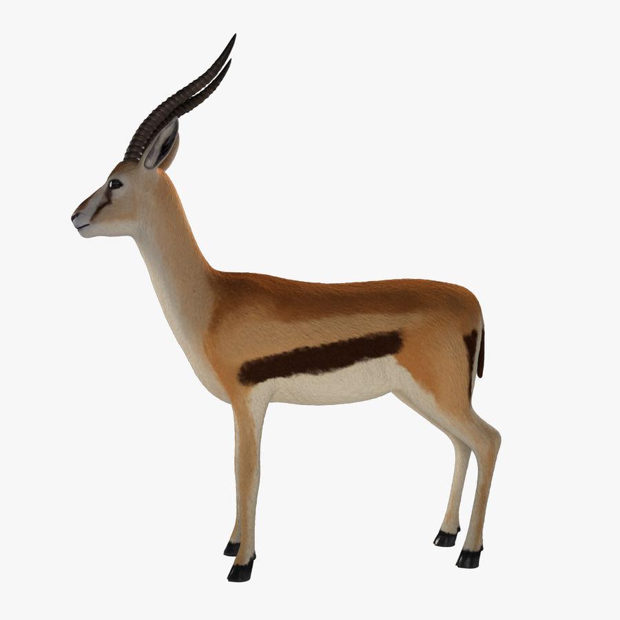 Gazelle royalty-free 3d model - Preview no. 4