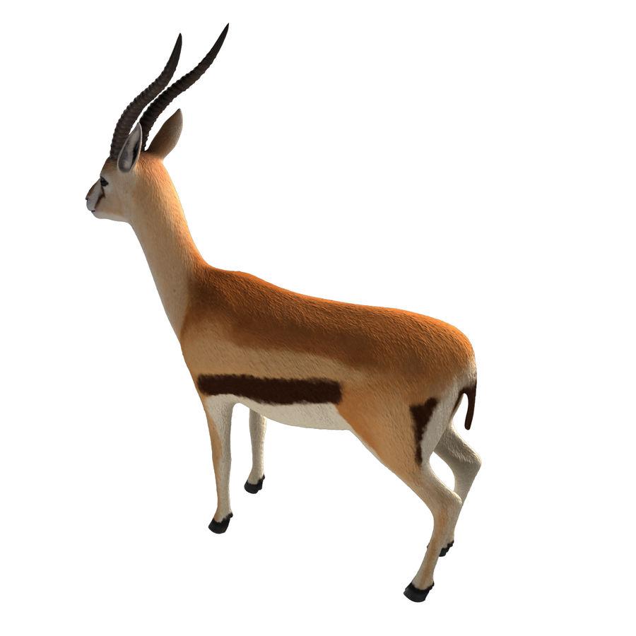 Gazelle royalty-free 3d model - Preview no. 8