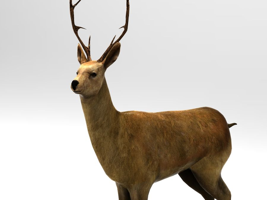 deer rigged royalty-free 3d model - Preview no. 8