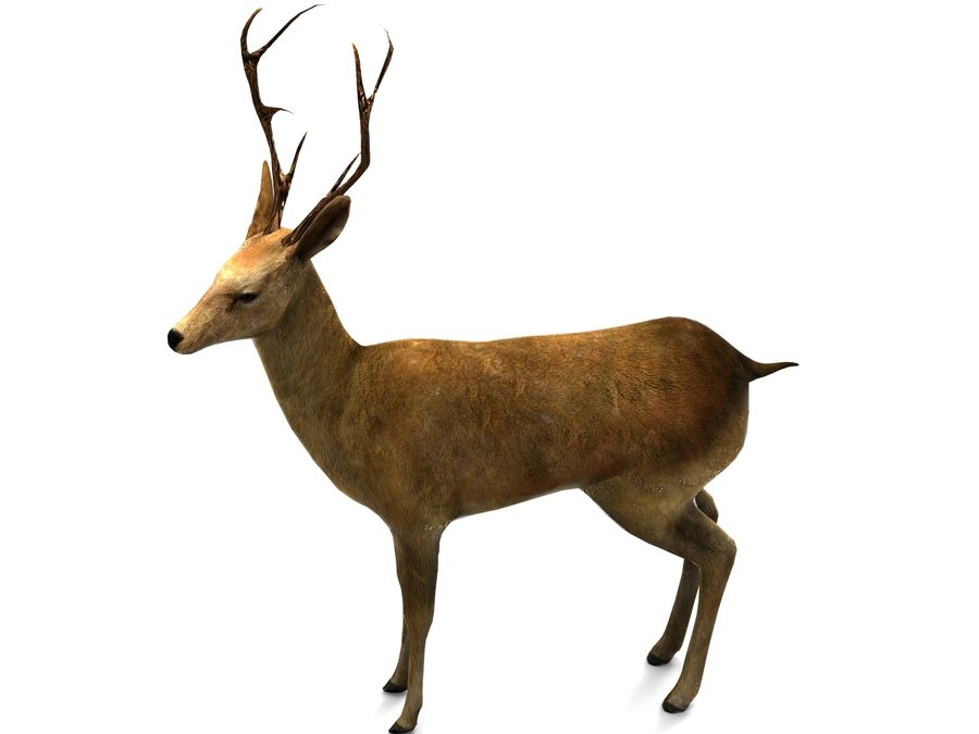 deer rigged royalty-free 3d model - Preview no. 7