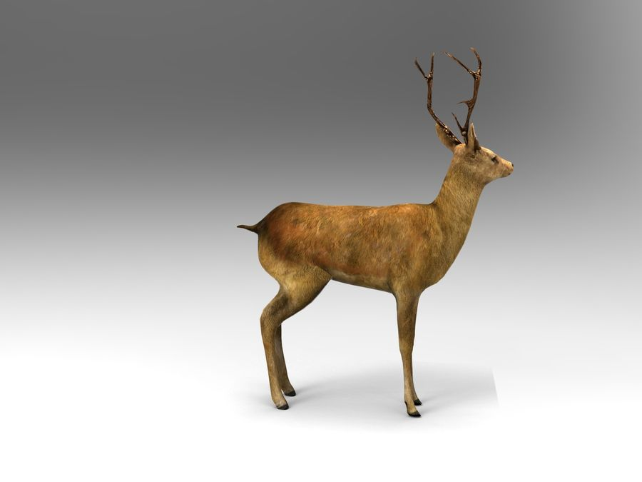 deer rigged royalty-free 3d model - Preview no. 4